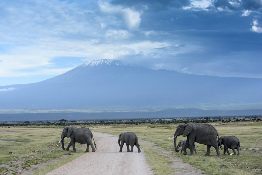 Zicht op de Kilimanjaro