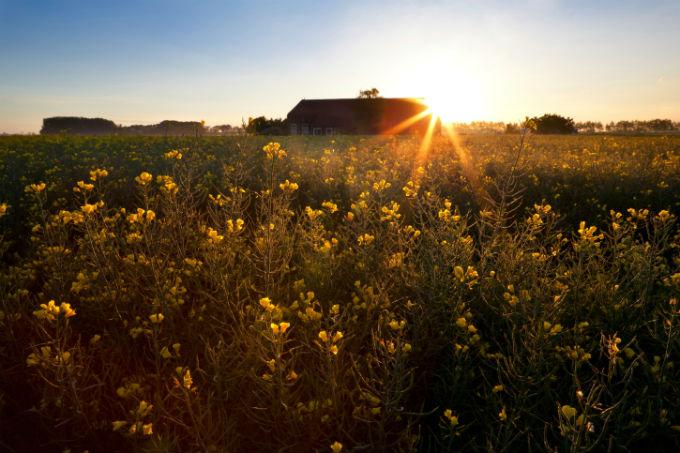 boerderij gele bloemen platteland Groningen